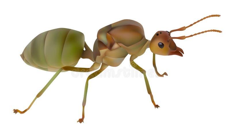 Reine rouge de fourmi illustration stock