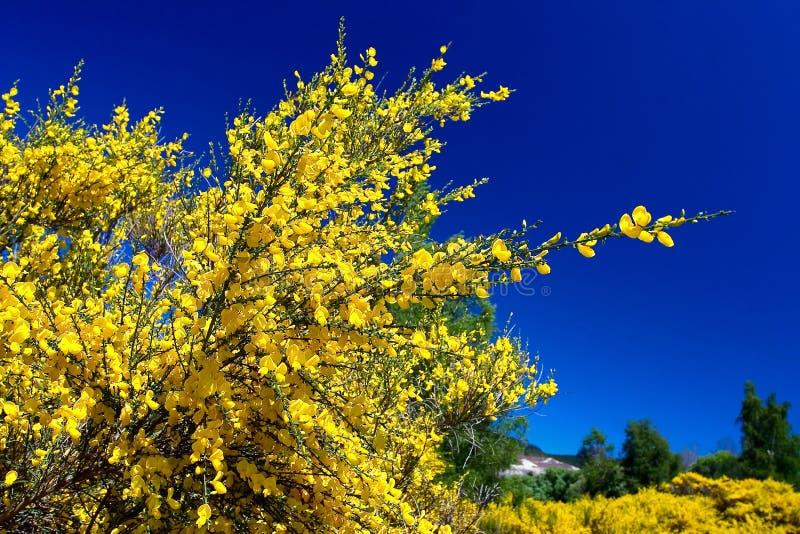 Download Reines blaues reines Gelb stockfoto. Bild von farbe, himmel - 9082916