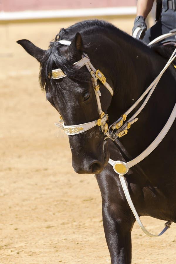 Reines Pferderennen sanftmütig und ergeben stockbilder