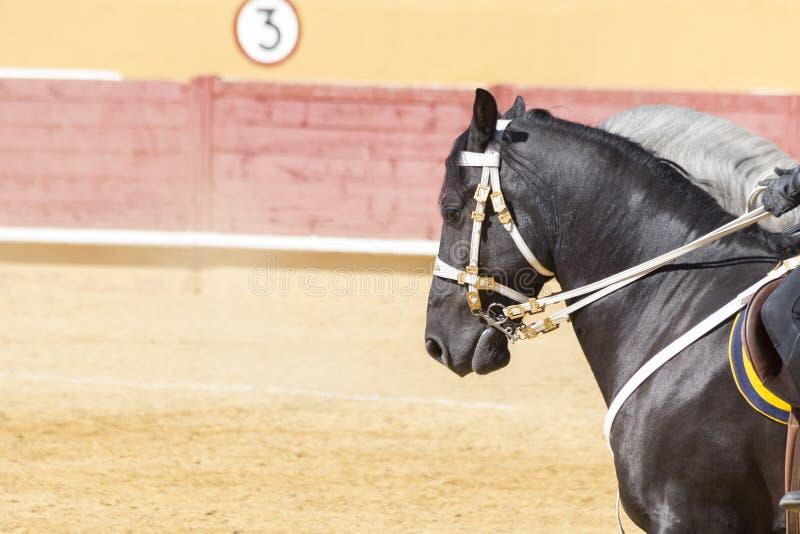 Reines Pferderennen sanftmütig und ergeben lizenzfreie stockbilder