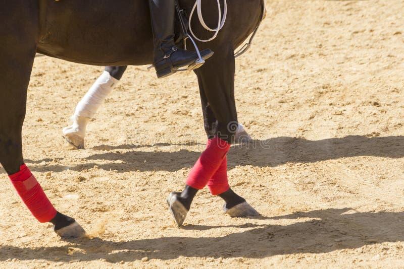 Reines Pferderennen sanftmütig und ergeben stockbild