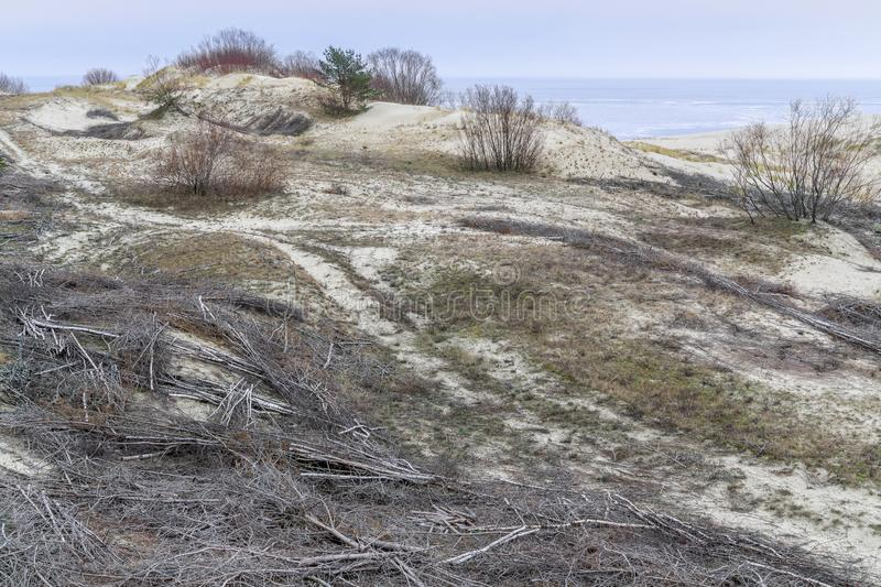 Reinforcement of sand dunes stock photography
