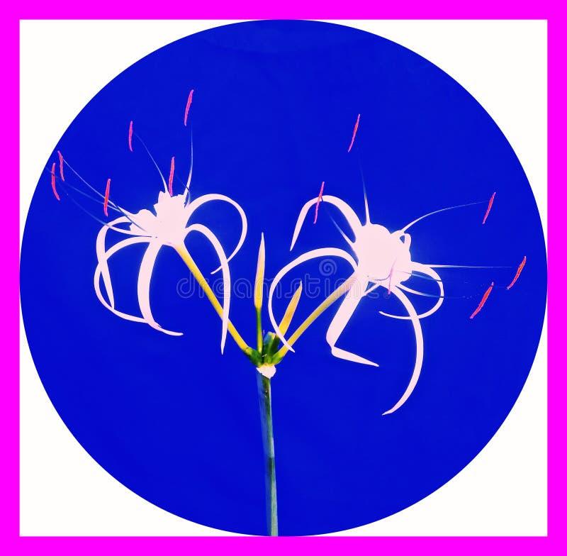 Reinheit von Blumen lizenzfreie stockfotos