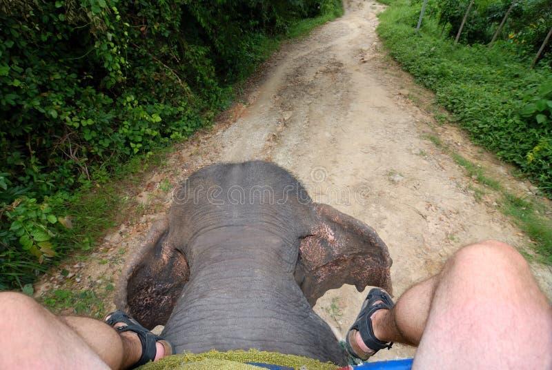 Reinigen eines Elefanten stockfoto