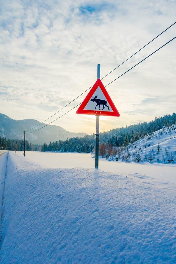 Reinly, Νορβηγία - 26 Μαρτίου 2018: Υπαίθρια άποψη του σημαδιού των αλκών που διασχίζουν σε μια πλευρά κατά τη διάρκεια του χειμώ στοκ φωτογραφίες