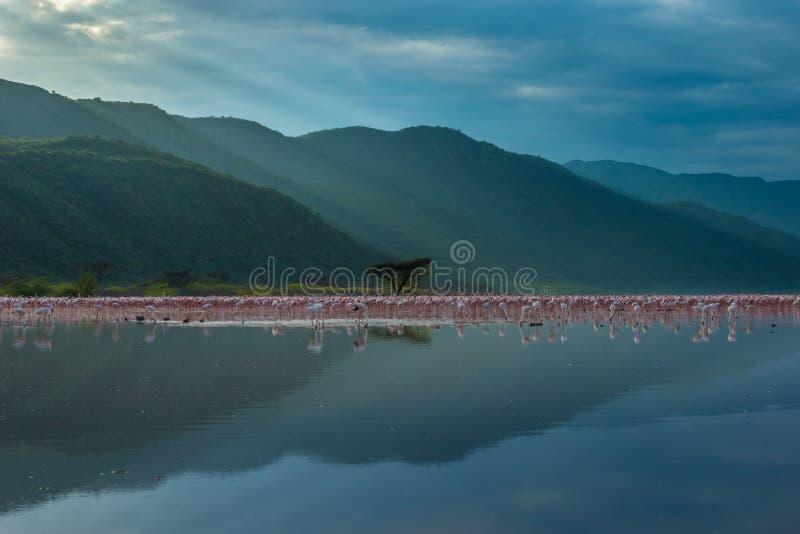 Reino do flamingo fotos de stock royalty free