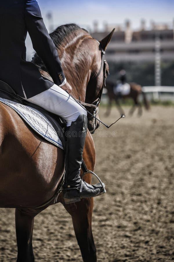 Reinrassiges Spanisches Pferd Stockbild - Bild von