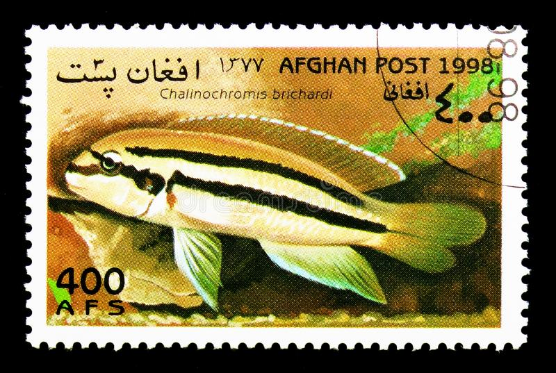 Reins Cichlid (Chalinochromis brichardi), Fish serie, circa 1998. MOSCOW, RUSSIA - DECEMBER 21, 2017: A stamp printed in Afghanistan shows Reins Cichlid ( stock photo