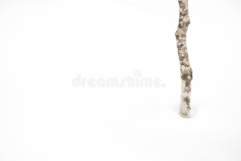 Reinweißwaldschnee lizenzfreie stockfotografie