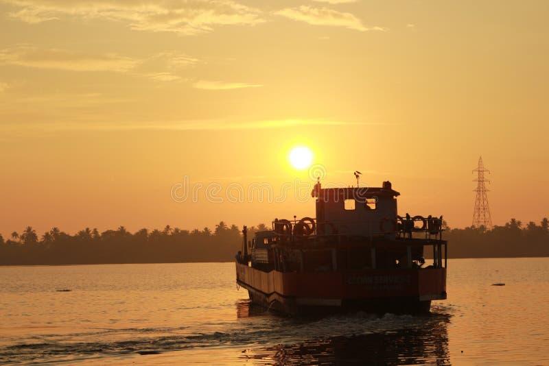 Reis aan de zonsopgang royalty-vrije stock foto's