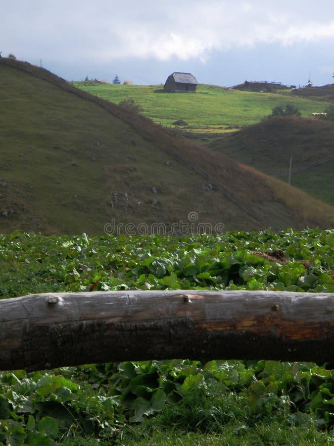 Reis in Cheile Gradistei, Roemenië stock fotografie