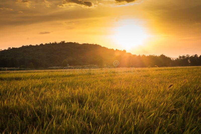 Reis fängt Landschaft auf stockfoto