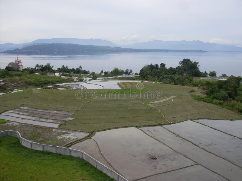 Reis fängt Sumatra auf stockfoto