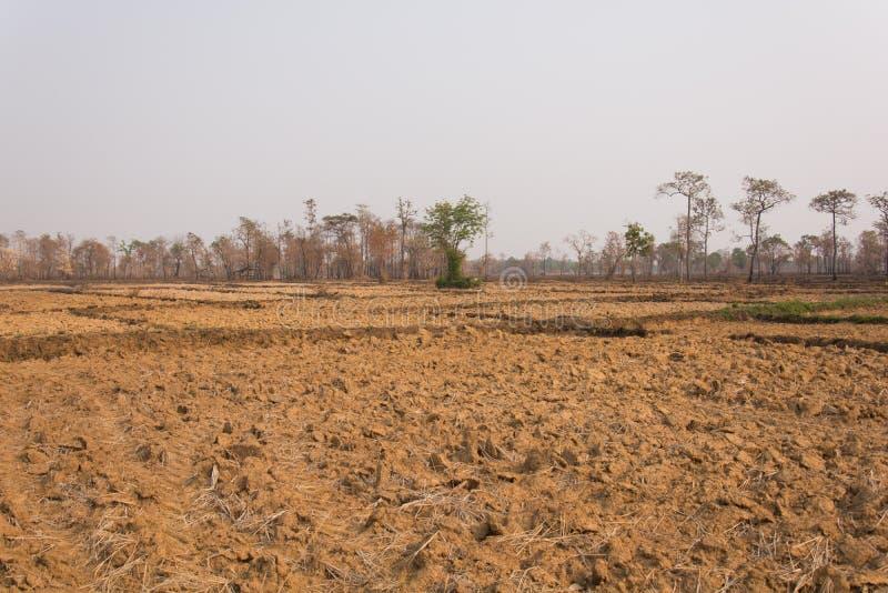 Reis-Feld nakhonphanom des Baums trockenes einsames stockbild