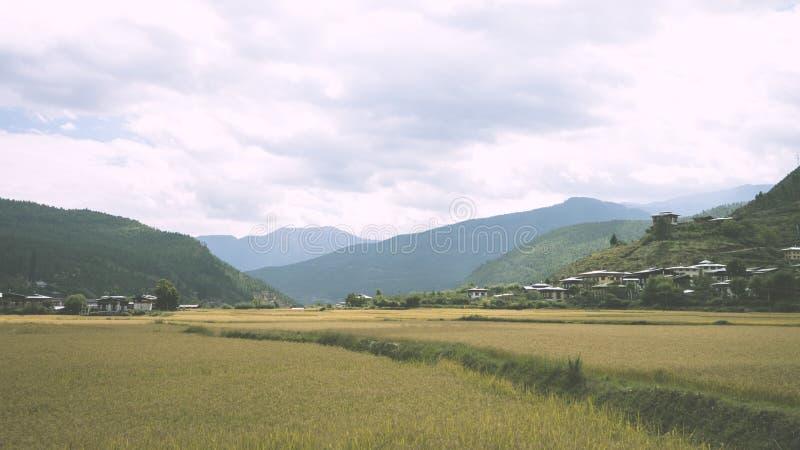 Reis-Felder in Bhutan lizenzfreie stockfotografie