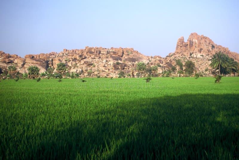 Reis-Felder, Indien lizenzfreie stockfotografie