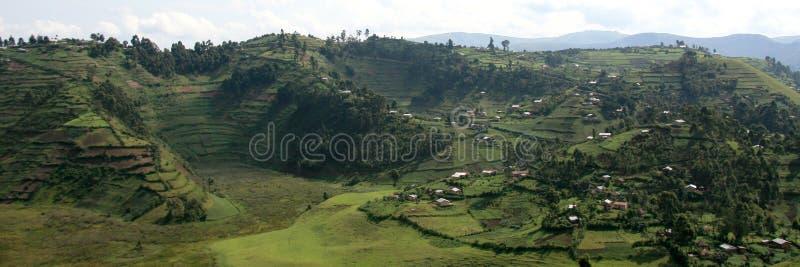 Reis-Felder in Uganda, Afrika stockbild