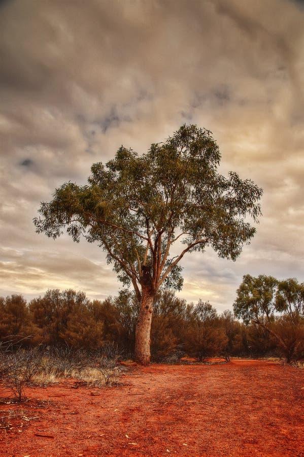 Reis Garganta de Austrália foto de stock