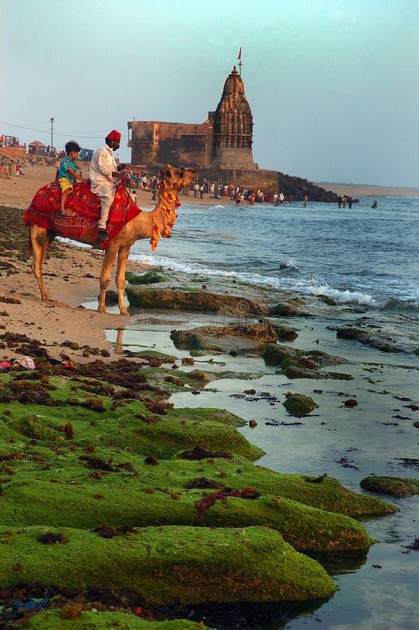 Reis Gujarat royalty-vrije stock foto's