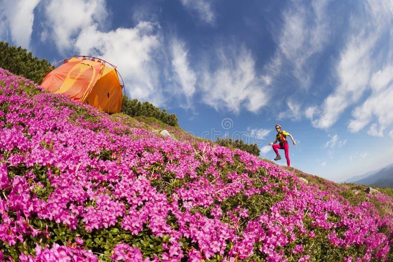 Reis met bloem de Karpaten royalty-vrije stock afbeeldingen