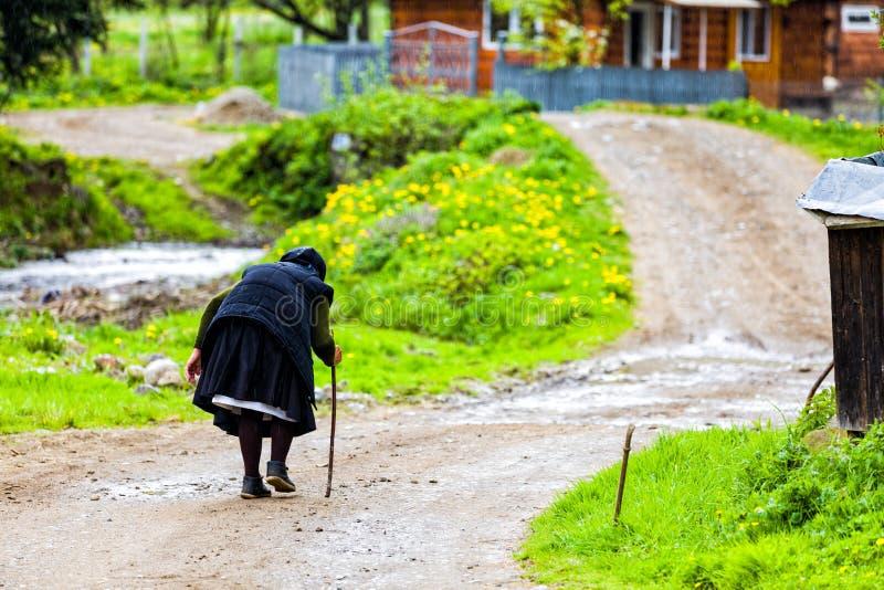 Reis met lange levensuur stock foto