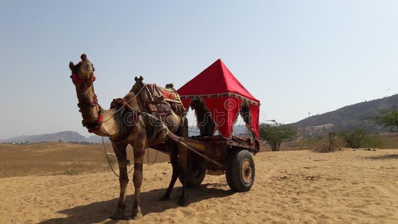 Reis naar Rajasthan India royalty-vrije stock fotografie