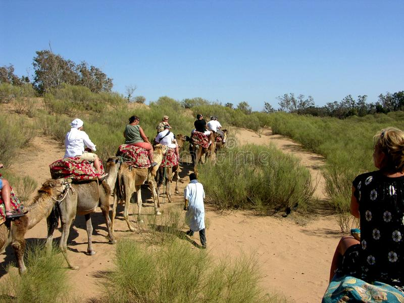 Reis op kamelen dichtbij Agadir in Marokko stock afbeelding