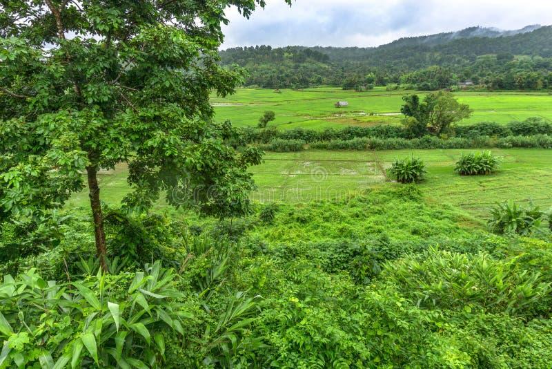 Reis-Paddy in Mae Hong Son, Thailand stockbilder