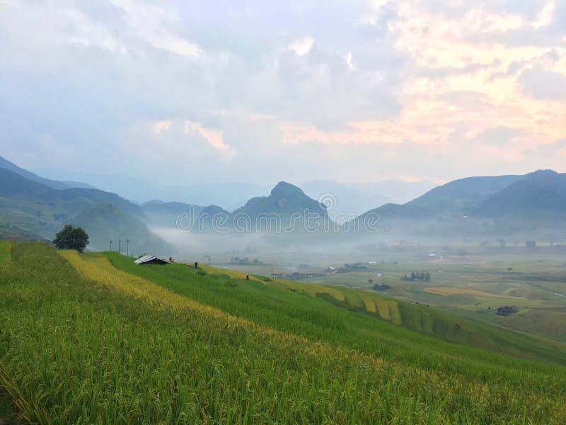 Reis refiled, Vietnam stockbild