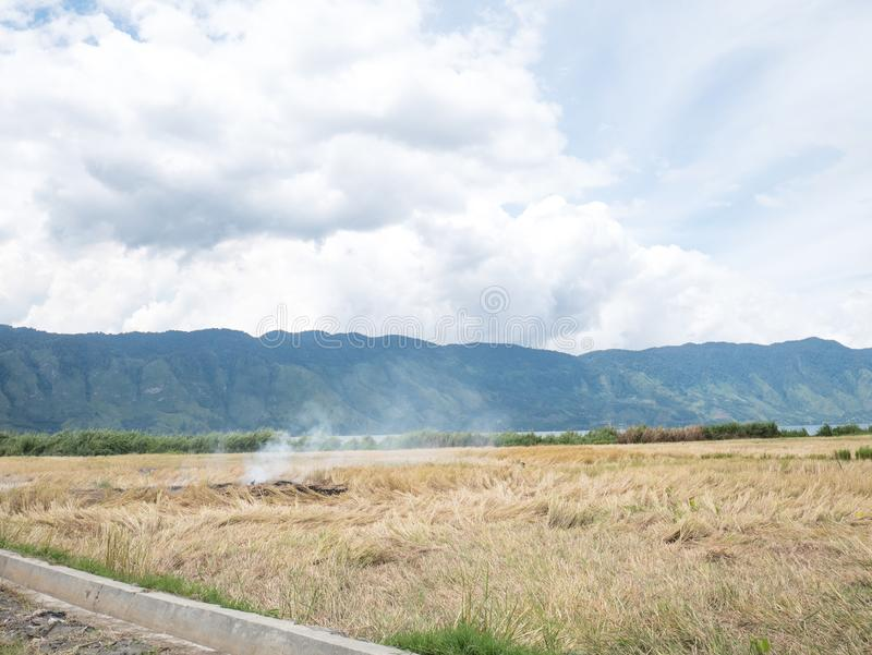 Reis Straw Open Field Burning On Paddy Farms Effected Air Pollut stockfotos