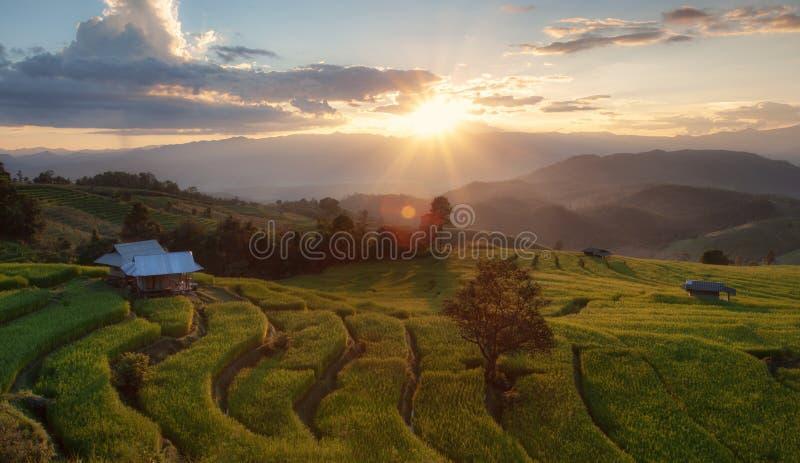 Reis-Terrasse an Verbot-PA Pong Piang, Chiang Mai, Thailand stockbilder