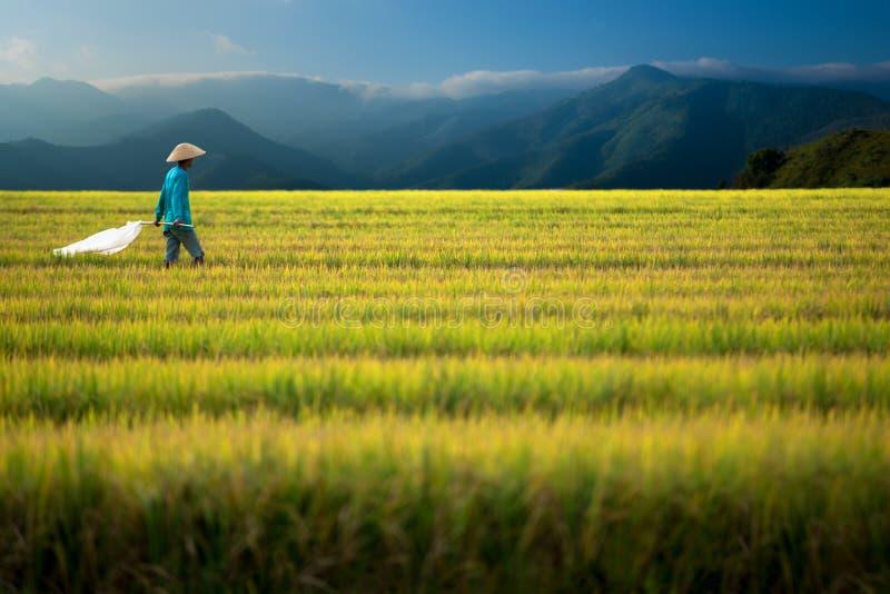 Reisarbeitskraft geht durch Feld lizenzfreie stockfotos