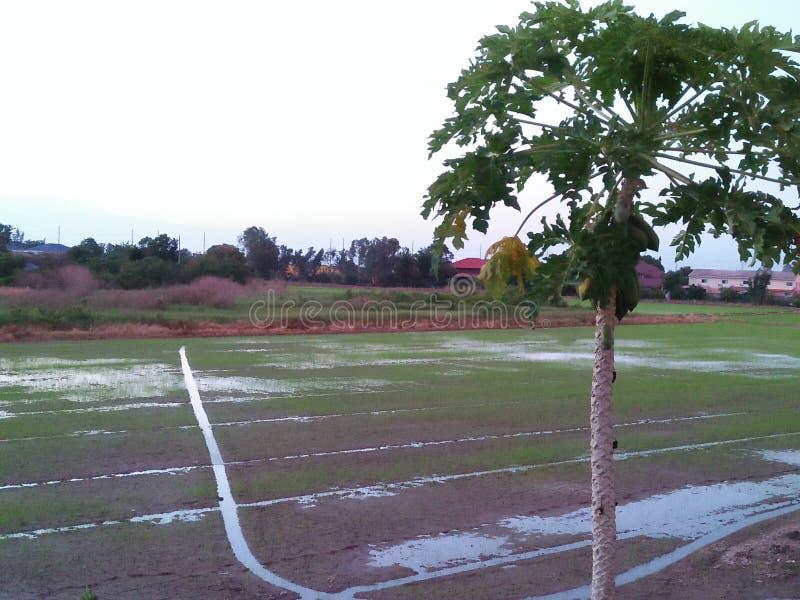Reisbauernhöfe lizenzfreie stockfotografie