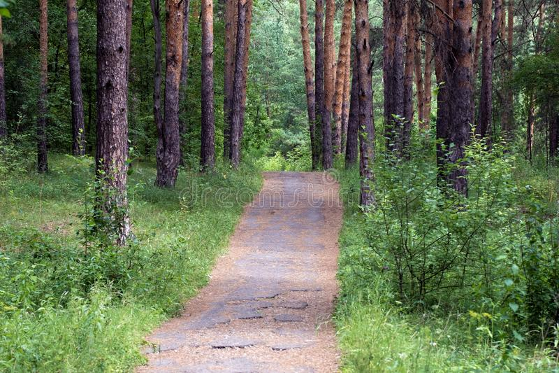 Reise durch den Kiefernwald, eine alte gepflasterte Straße durch das Holz für Wanderer dort sind die Nadeln von lizenzfreie stockfotografie