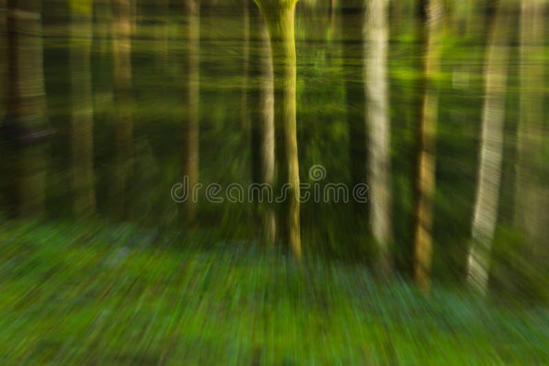 Reise durch den Wald stockfotografie