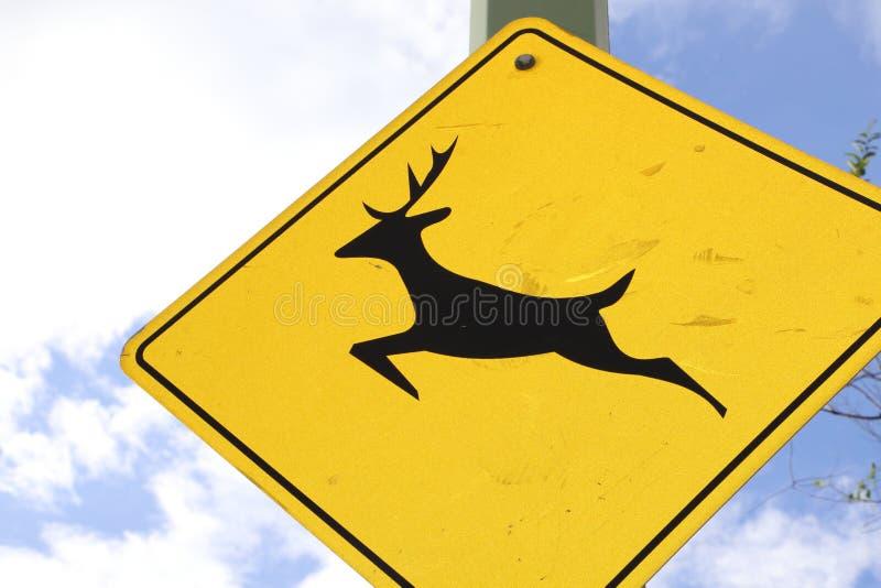 Reise zur Zeichenanschlagtafel der Kanada-wild lebenden Tiere oder zur vorderen Abdeckung für Zeitschriften lizenzfreie stockfotografie