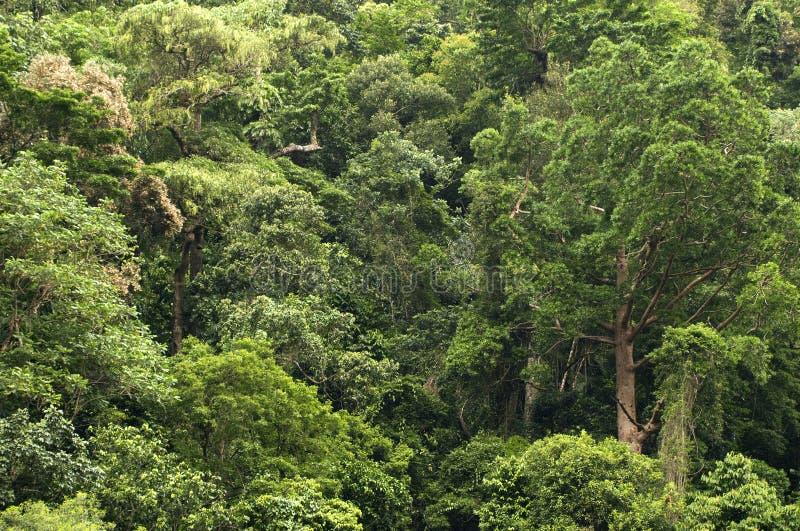 Reisen der Barron Schlucht-Nationalpark stockfoto