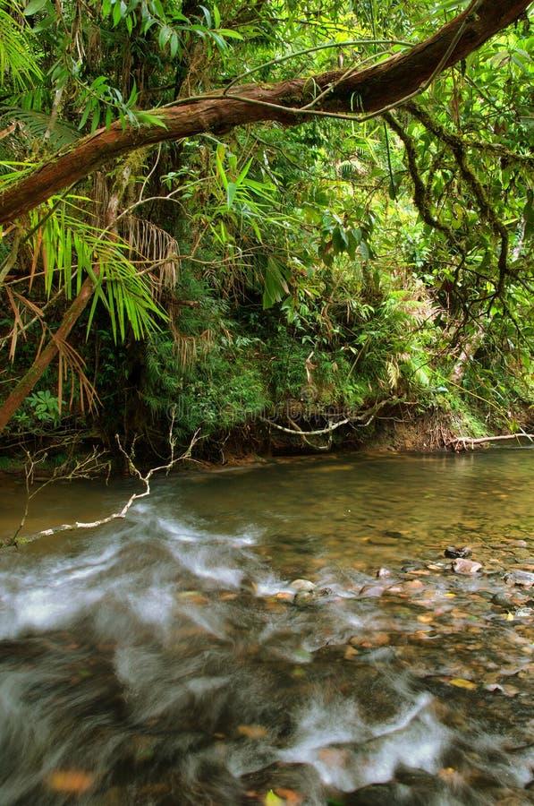 Reisen der Daintree Nationalpark stockfotos