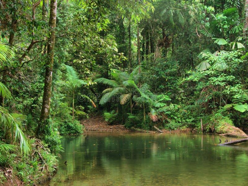 Reisen der Daintree Nationalpark stockbild