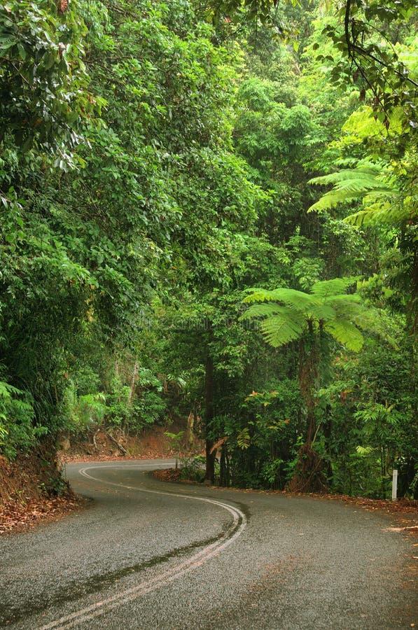Reisen der Daintree Nationalpark stockfoto