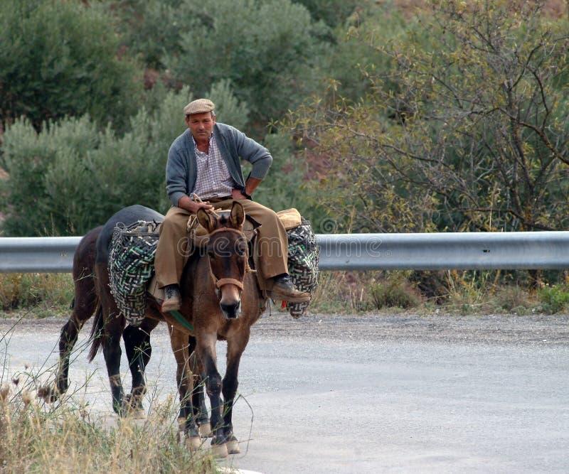 Reisen durch Esel lizenzfreie stockfotografie