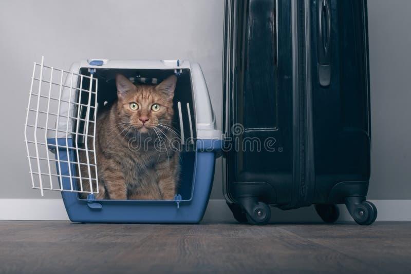 Reisen mit einer Katze - Ingwerkatze in einer Haustierfördermaschine nahe bei einem Koffer lizenzfreie stockbilder