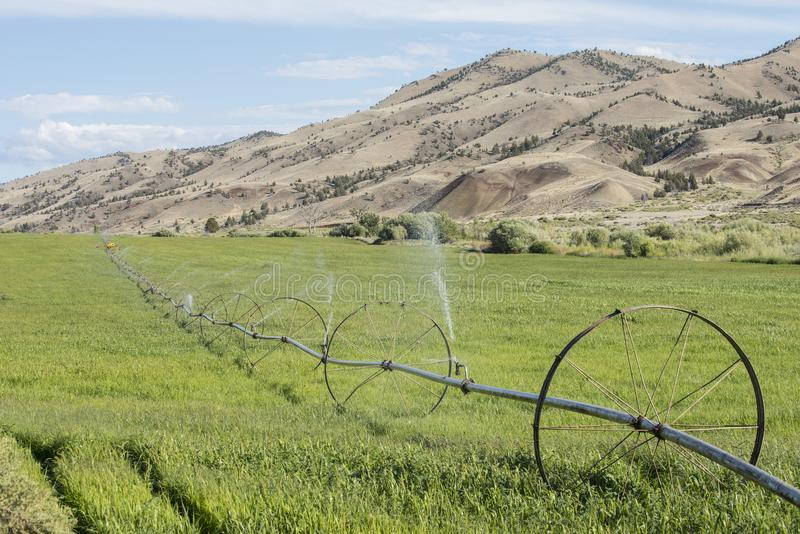 Reisende Berieselungsanlage bewässert Ernte für Tierfutter stockbilder