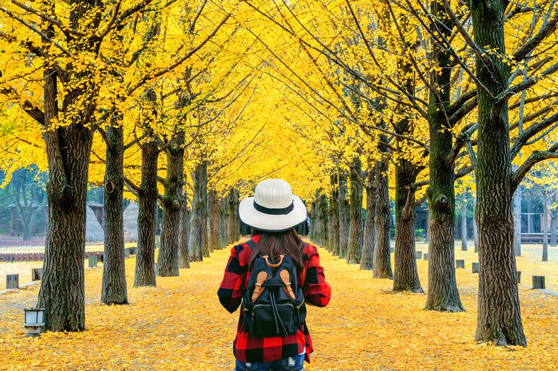 Reisende mit Rucksack, die in der Reihe des gelben Ginkgo-Baumes in Nami Island, Korea, spazieren gehen stockfotografie