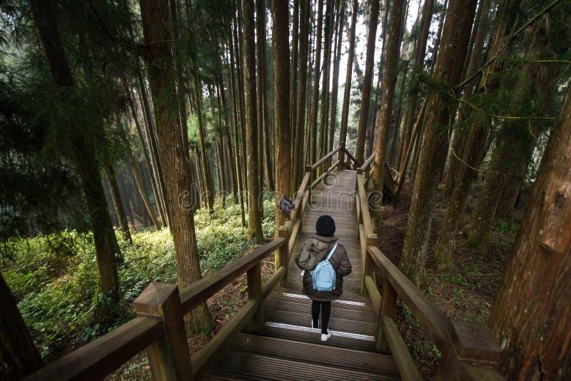 Reisender, der auf Naturschutzgebiet Alishan nationalen Walkboard-Weg geht lizenzfreies stockfoto