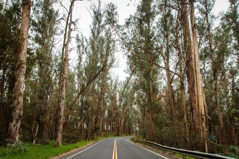 Reisendes landeinwärts Maui stockfotos