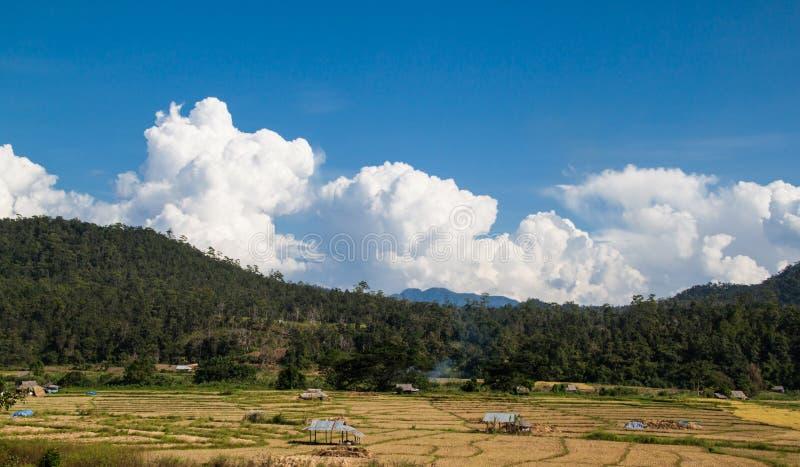 Download Reisfeld stockbild. Bild von frech, outdoor, himmel, panorama - 27732163