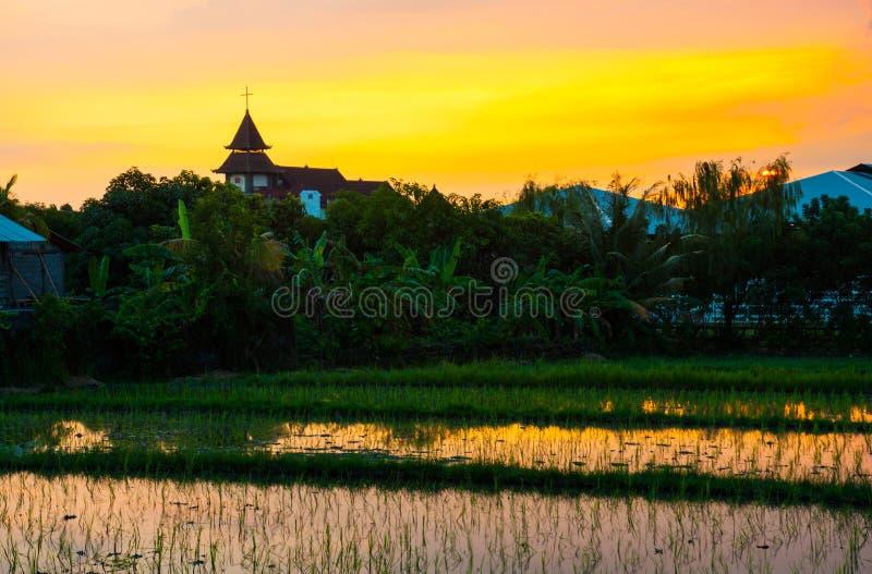 Reisfeld auf Sonnenuntergang lizenzfreies stockbild