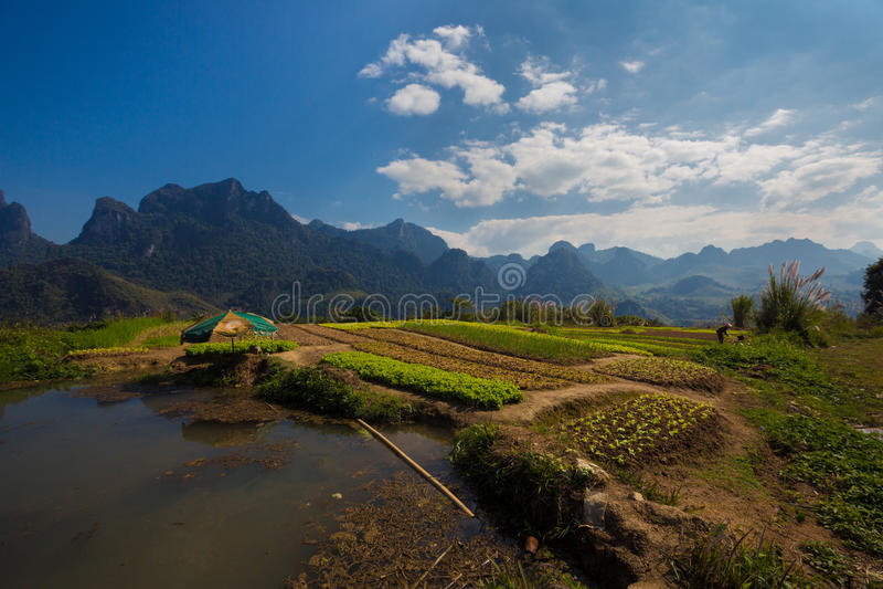 Reisfeld in den laotianischen Bergen stockbild