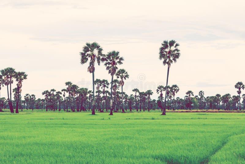 Reisfeld in der Regenzeit Retro- Weinlesefiltereffekt lizenzfreies stockbild